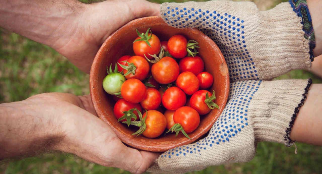 Die besten Urban Gardening Ideen, mit denen man durch Vertical gardening und andere kreative Upcycling-Ideen auch auf kleinen Balkonen Gemüse anbauen kann